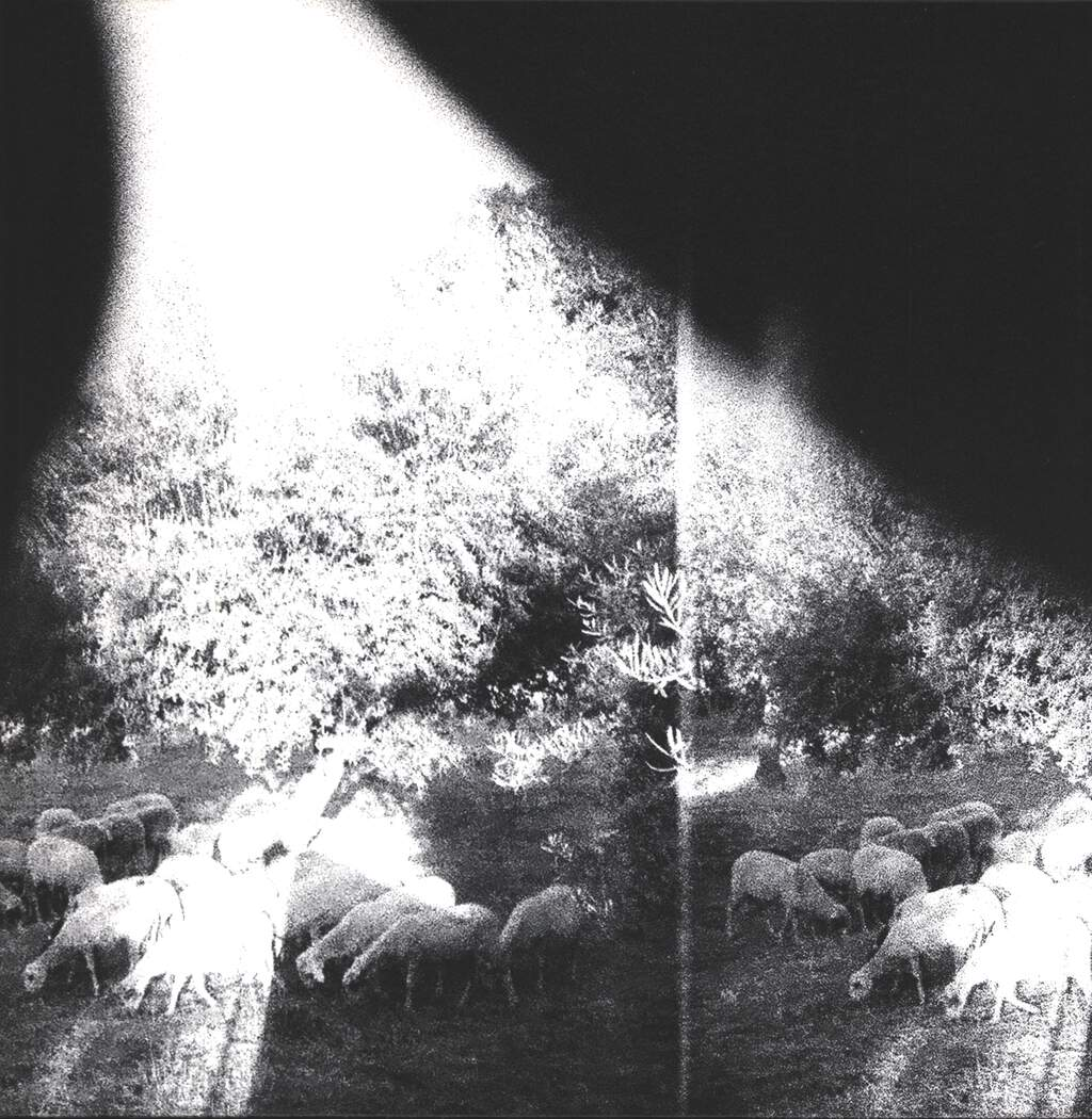 Godspeed You Black Emperor: Asunder, Sweet And Other Distress, LP (Vinyl)