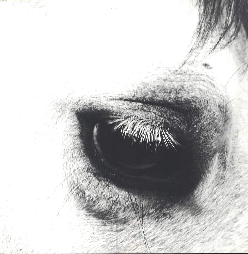 Creepoid: Horse Heaven, LP (Vinyl)